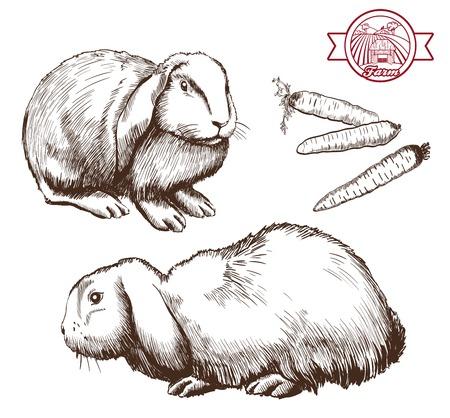 breeding: breeding rabbits. set of vector sketches on a white background Illustration