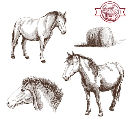 filly: breeding horses. set of vector sketches on a white background
