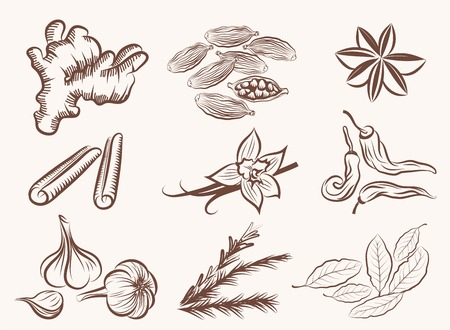 natural spices set of vector sketches on a white background
