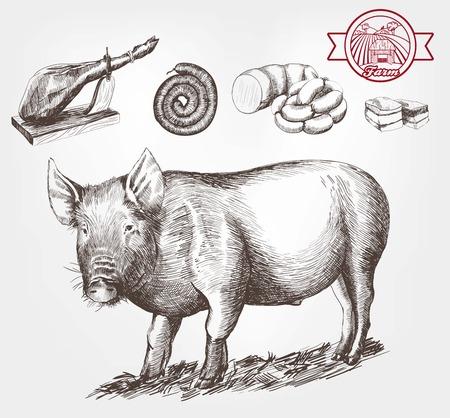豚の繁殖。白い背景の上ベクトル スケッチ