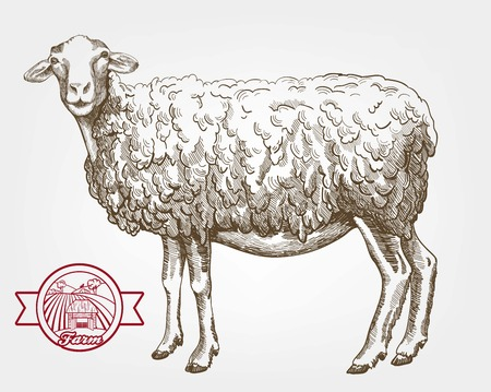 breeding: sheep breeding. vector sketch on a white background