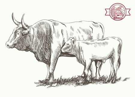 adult bull and goby  grazing cattle vector sketch on a white background