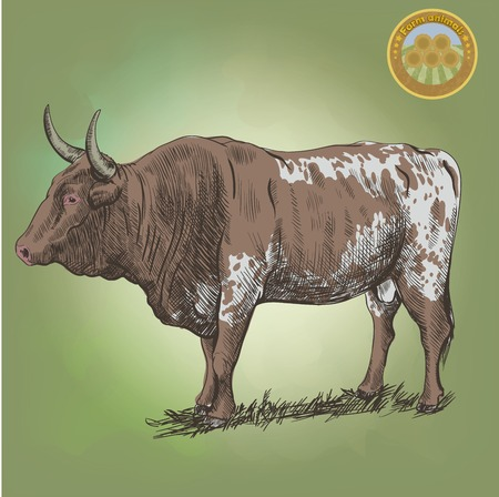 grazing: adult bull  grazing cattle vector sketch on a green background