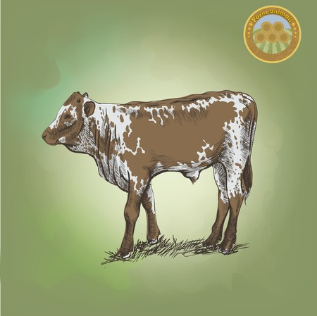 young bull  grazing cattle vector sketch on a green background