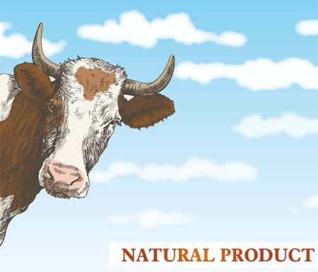 ruminant: cow looks out from behind a corner against a beautiful blue sky with white clouds Illustration