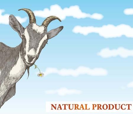 goat head: goat looks out from behind a corner against a beautiful blue sky with white clouds Illustration