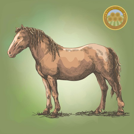 pet breeding: graceful horse posing in a standing position. Vector colored illustration