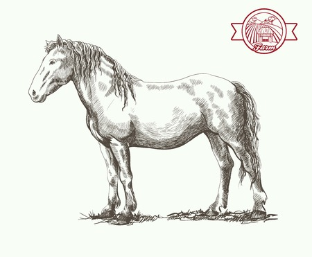 pet breeding: graceful horse posing in a standing position vector sketch on a white background Illustration