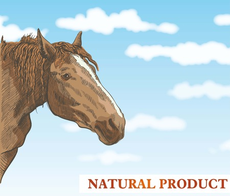 Horse looks out from behind a corner against a beautiful blue sky with white clouds Vector
