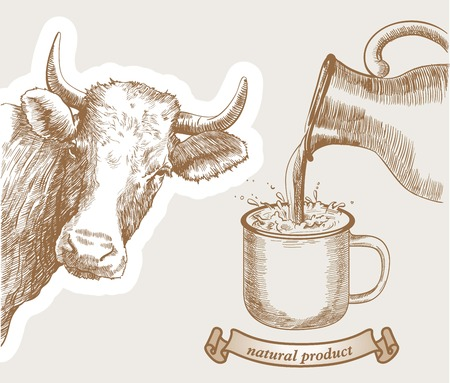 cow and natural whole milk is poured from a jug into a mug
