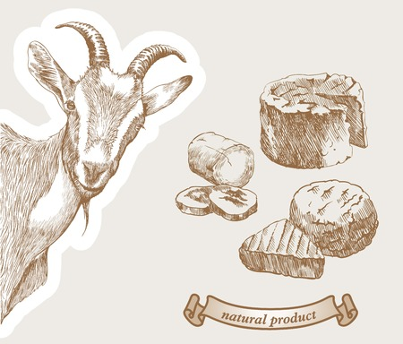goat cheese: Goat peeking from the corner and natural products which produced from goats milk Illustration