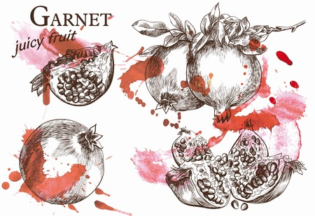 rich in vitamins: Beautiful vector illustration of pomegranate on the branch, which very juicy and located on the watercolor background