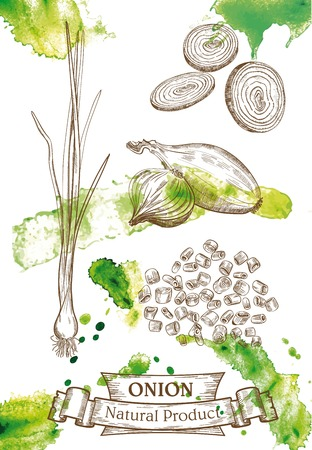 onion: Vector drawing of spring onions, and chopped onion rings, which located on watercolor background Illustration