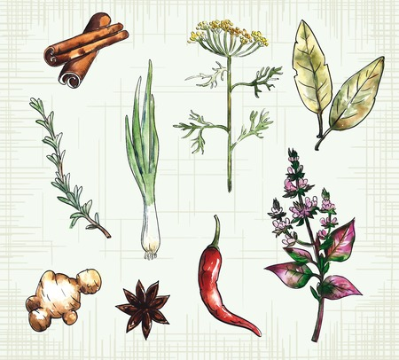 tarragon: Group of  nine colorful spices on the checkered background