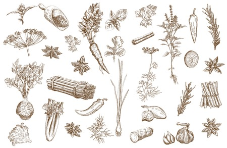 Set of vector sketches of  herbs used as spices Çizim