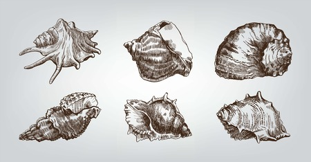 seashell: Beautiful group of seashells sketches on background with ocean beach