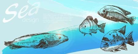 dorado: Four sea fish on beautiful blue background Illustration