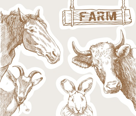 ungulates: set of four vector sketches farm animals on a gray background Illustration