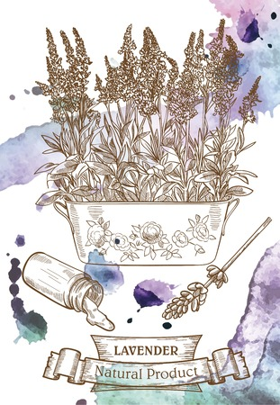 Vector drawing of lavender which located on the watercolor background