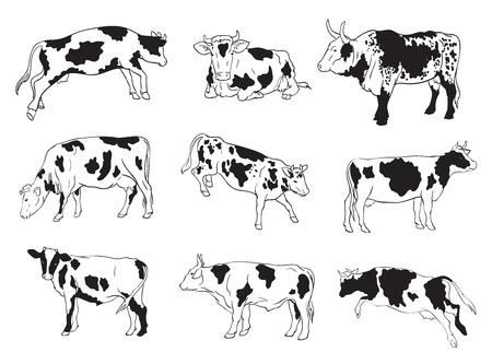 set of nine vector icons cows shown in various poses