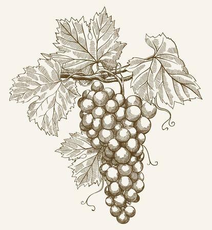 vector illustratie van de gravure druiven op de tak op een grijze achtergrond