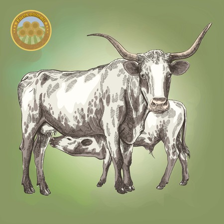 cow vector: vector illustration of a cow and her little calf