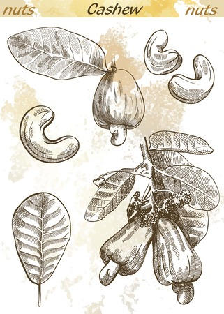 cashew: cashew set of vector sketches on an abstract background