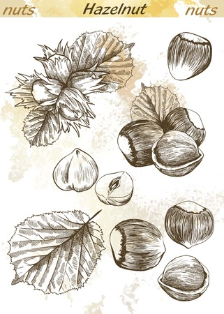 hazelnut: hazelnut set of vector sketches on an abstract background