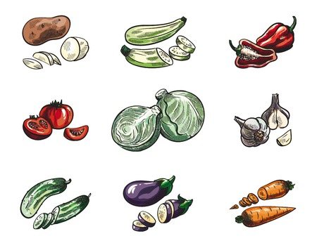 cabbage: Vegetables set of vector sketches on a white background Illustration