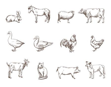 horse cock: Vector sketch of twelve farm animals silhouette