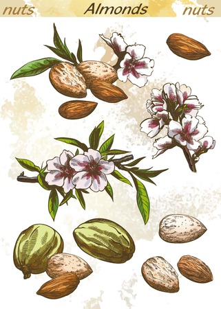 ready to eat: almonds set of vector color sketches on an abstract background Illustration