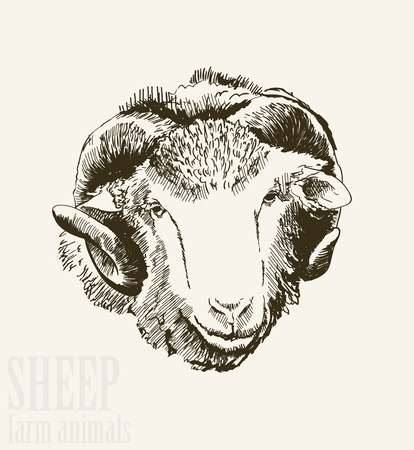 image lamb: Vector illustration of engraving ram head close up on white background