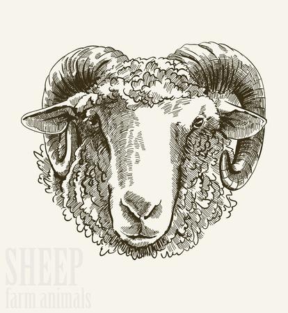 carnero: Ilustración vectorial de la cabeza carnero grabado de cerca sobre fondo blanco Vectores