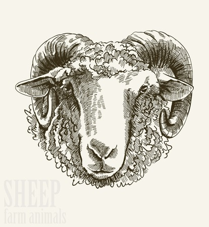 Vector illustration of engraving ram head close up on white background