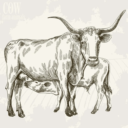 ruminant: vector illustration of a cow and her little calf