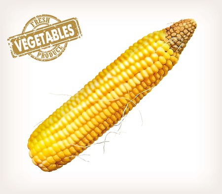 corncob: Vector color image of an ear of corn on a white background