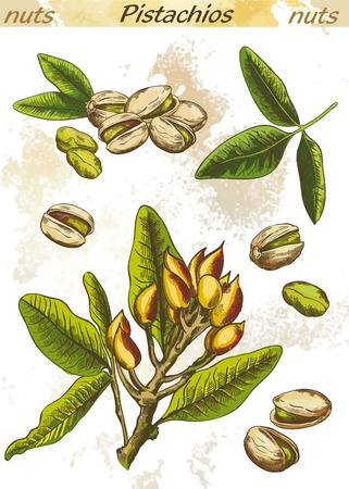 pistachios: pistachios set of color vector sketches on an abstract background
