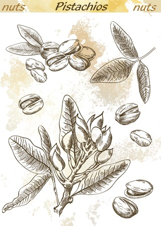 pistachios: pistachios set of vector sketches on an abstract background