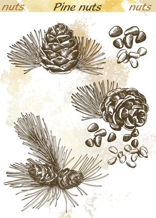 pinoli: pinoli insieme di schizzi su uno sfondo astratto