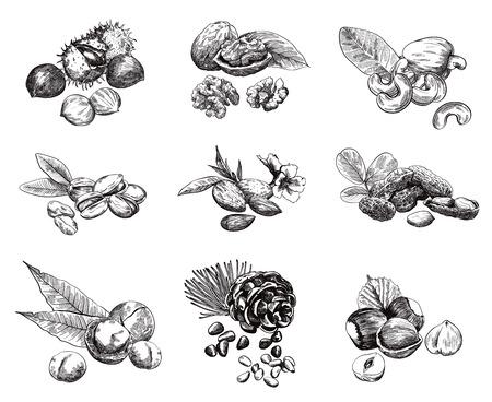 견과류의 일부 종류. 구 벡터 스케치 세트