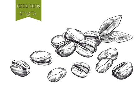 pistachios: pistachios set of vector sketches on white background