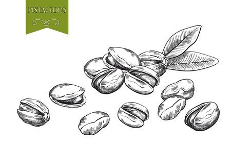 pistachios: pistachios set of vector sketches on white background