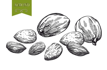 almond: almonds set of vector sketches on white background