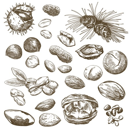 pine nut: Various kinds of nuts set of sketches made by hand