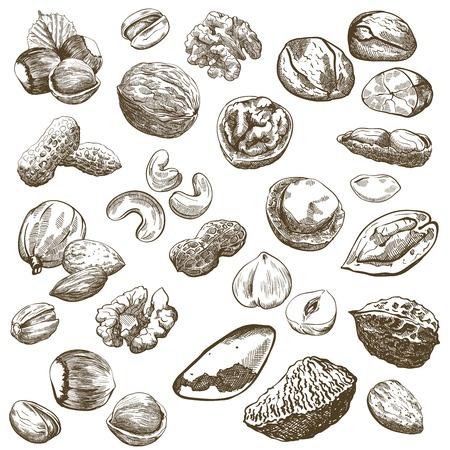 pinoli: Vari tipi di noci set di schizzi fatti a mano