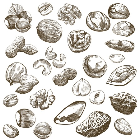 pistachios: Various kinds of nuts set of sketches made by hand