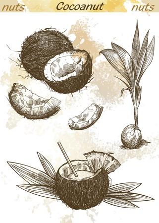 noix de coco: cocktail de lait de coco et une demi-noix de coco