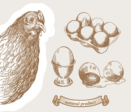 poultry: Rooster peeking out from behind a corner and poultry products Illustration