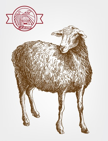 breeding: sheep breeding. vector sketch on a grey background