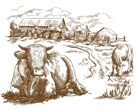 cattle grazing: cattle grazing in the open air. sketch made by hand Illustration